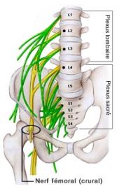 nerf crural